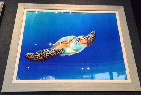 Muldoon-Sea Turtle in Flight