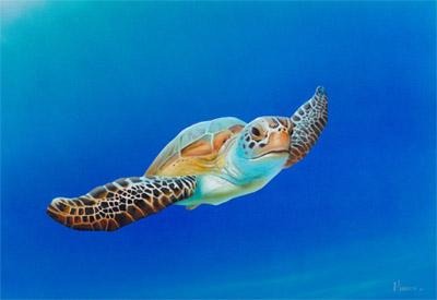Steven Muldoon Sea Turtle in Flight